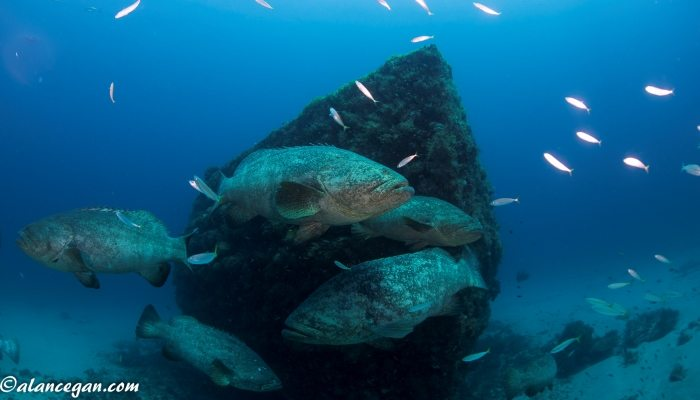 "The Andrew ""Red"" Harris Foundation - Building Artificial Reefs to Enhance the Marine Environment"