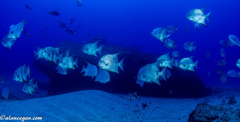 """Andrew """"Red"""" Harris Foundation - Palm Beach County Artificial Reefs"""