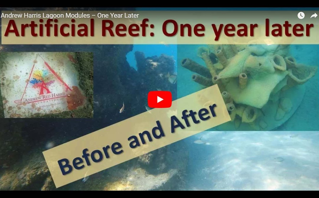 """Shawn McCall Video Comparing Andrew """"Red"""" Harris Foundation's First Reef One Year Later!"""